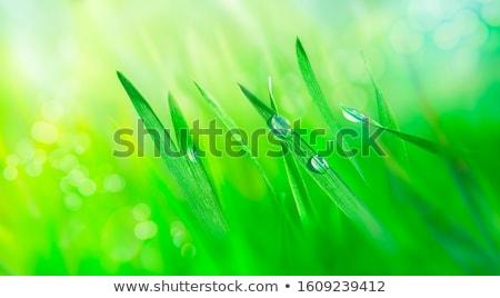 erva · daninha · verde · natureza · milagre · jardim · céu - foto stock © stevanovicigor