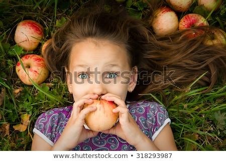 giocattolo · riccio · mela · isolato · bianco · sfondo - foto d'archivio © karandaev