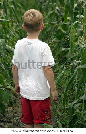 child standing behind vegetables Stock photo © photography33