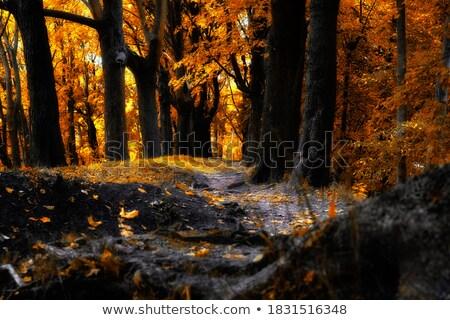ősz ösvény park gyönyörű színek kék ég Stock fotó © macropixel