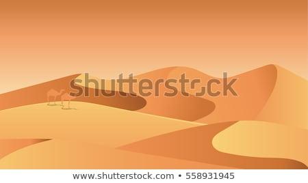 Flat desert Stock photo © ajlber