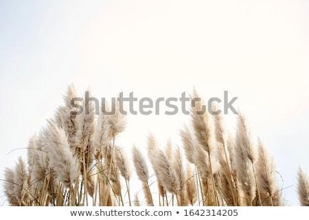 fű · kék · ég · toll · természet · égbolt · tavasz - stock fotó © saddako2