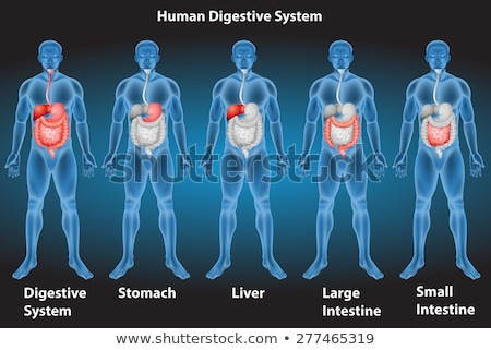Black man with red stomach and small intestine Stock photo © wavebreak_media