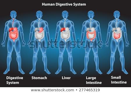 Siyah adam kırmızı mide küçük vücut dijital Stok fotoğraf © wavebreak_media