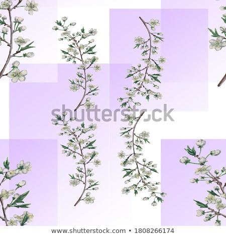 Szent vektor grafikus szett három különböző Stock fotó © LittleLion
