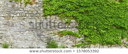 bella · piastrellato · pattern · abstract · muro - foto d'archivio © elxeneize