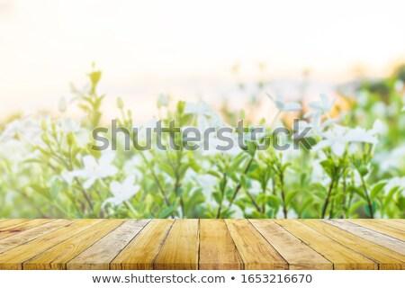 wiosną · drzewo · kwiaty · kwiat · kwitnąć · ciepły - zdjęcia stock © justinb