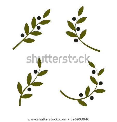 Olive tree branch. Set of labels. Vector illustration stock photo © ussr