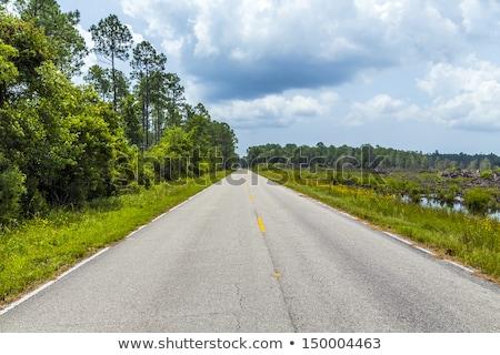 Straat Florida moeras warm zomer dag Stockfoto © meinzahn