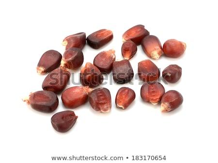 Red heirloom sweetcorn seeds Stock photo © sarahdoow