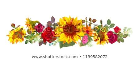girassóis · grama · grande · flor · amarelo · branco - foto stock © carodi
