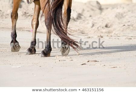 Patkó tengerpart nyomtatott sport természet homok Stock fotó © ivonnewierink