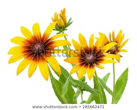 黄色 花 マクロ クローズアップ 花 春 ストックフォト © stocker