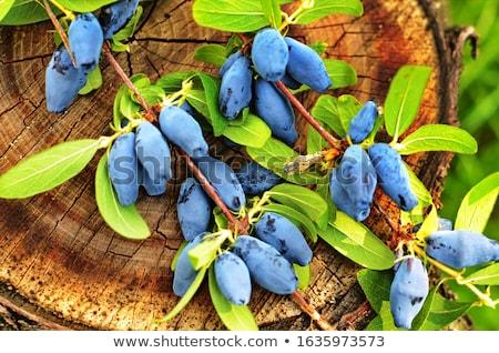 液果類 · 春 · フルーツ · 食品 · 背景 · 青 - ストックフォト © zhekos
