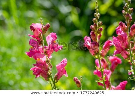 Coloré fleurs blanche nature beauté été Photo stock © joker