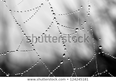 close up view of the strings of a spiders web stock photo © michaklootwijk