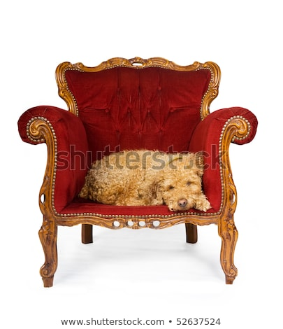 Stock photo: Dog sleeping in a red velvet couch