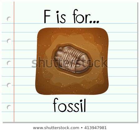 Alfabe fosil örnek kâğıt çocuklar eğitim Stok fotoğraf © bluering