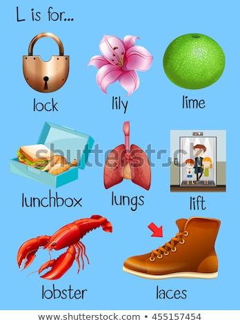 Letter l lelie kinderen kind achtergrond kunst Stockfoto © bluering