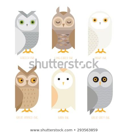 вектора стиль иллюстрация белый совы изолированный Сток-фото © curiosity