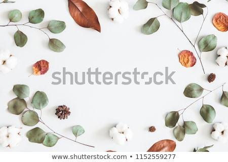 Pine cone and autumn leaves on white background Stock photo © wavebreak_media