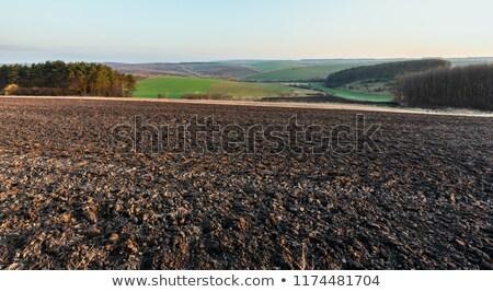 Ondulato campi estate strisce panorama rosolare Foto d'archivio © hraska