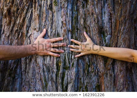 couple hugging tree stock photo © is2