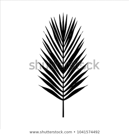 Seamless color palm leave. Flat style. Black and white. Stock photo © alexmillos