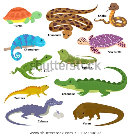 Set of reptiles in nature Stock photo © bluering