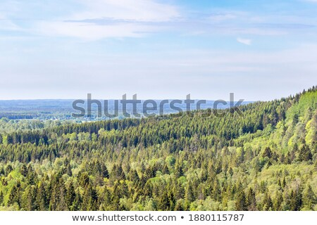 Greenery deciduous trees on a summer day. Aerial view of the drone as a natural layout Stock photo © artjazz