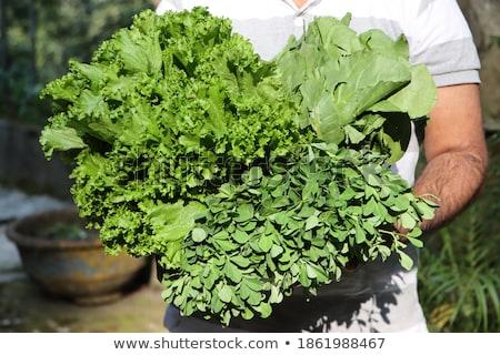 野菜 アジア 市場 新鮮な 緑 通り ストックフォト © vapi