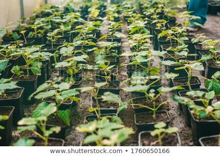 小さな ツリー 早い 春 成長 地球 ストックフォト © robuart