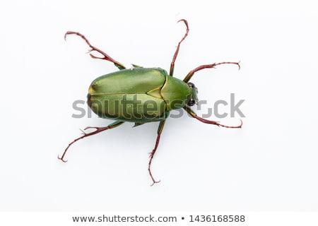 Yeşil bokböceği makro kuru toprak doğa Stok fotoğraf © ldambies