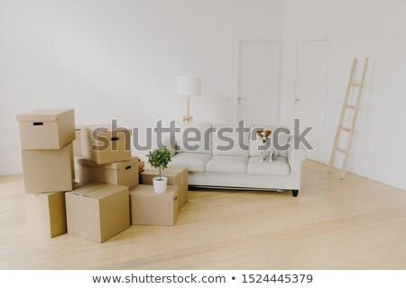 Przestronny pokój sofa tektury pola drabiny Zdjęcia stock © vkstudio