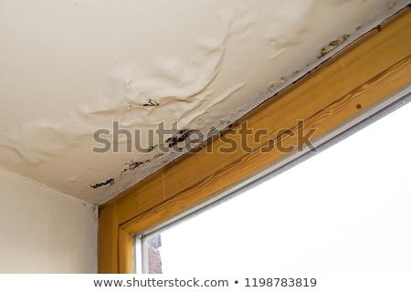 Teto água dano casa chamada Foto stock © AndreyPopov