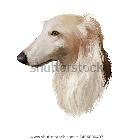 Borzoi or Russian Wolfhound Stock photo © eriklam