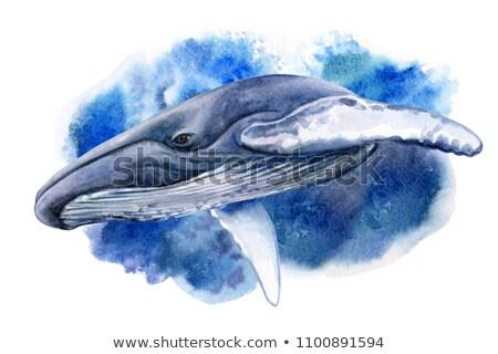 кит · Cartoon · Cute · белый · вектора - Сток-фото © rastudio
