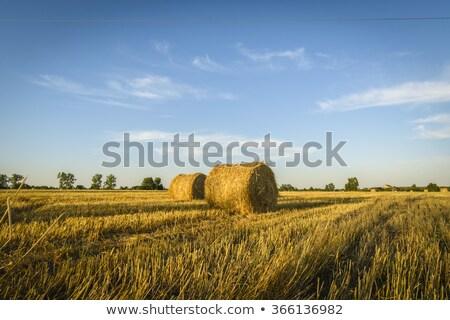 フィールド 乾草 山 森林 草 日没 ストックフォト © borysshevchuk