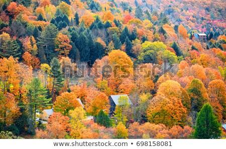 Düşmek yeşillik Vermont ABD manzara yol Stok fotoğraf © DonLand