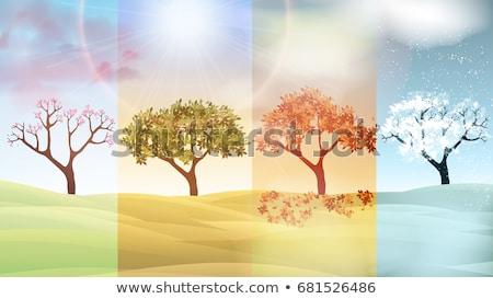 tavasz · nyár · évszakok · poszter · illusztráció · szezonális - stock fotó © carodi