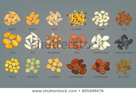 Stock photo: Sunflower seed and wheat grains
