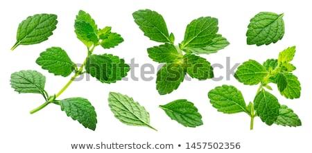 Citrom balzsam tányér fű levél zöld Stock fotó © varts