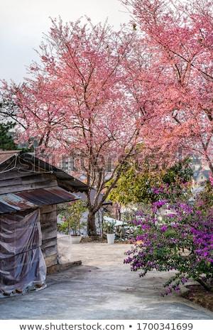 kiraz · çiçek · güzel · ahşap · yaprak - stok fotoğraf © anan