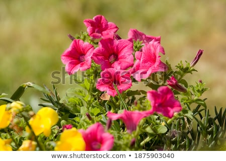 Illatos kert vektor végtelen minta virágmintás kicsi Stock fotó © LittleLion