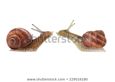 love snails Stock photo © mady70