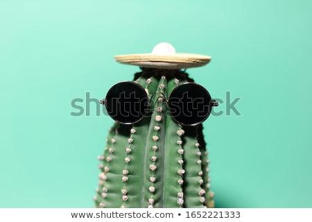 Növekvő kaktusz közelkép zöld virág háttér Stock fotó © OleksandrO