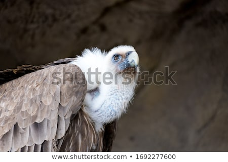 white backed vultures sitting in a tree stock photo © simoneeman