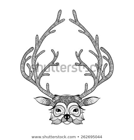 koponya · izolált · csontváz · fej · fehér · halál - stock fotó © frescomovie