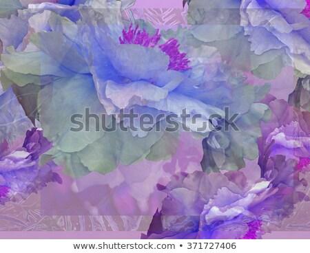varietà · colorato · fiori · vettore · design · illustrazione - foto d'archivio © theblueplanet