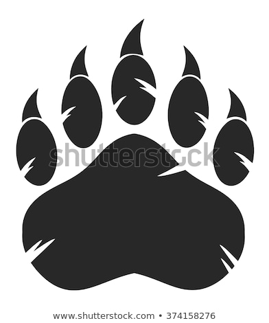 bear footprint with claw scratches vector stock photo © andrei_